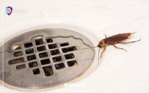 القضاء على صراصير المجاري بالكويت